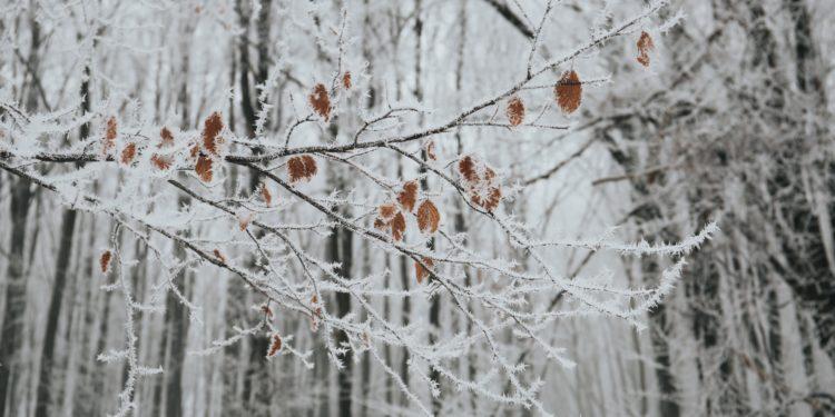 Fotografia odporność na zimę